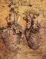 Heart And Its Blood Vessels - Leonardo Da Vinci