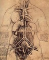 Drawing Of A Womans Torso - Leonardo Da Vinci