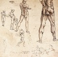 Anatomical Studies - Leonardo Da Vinci