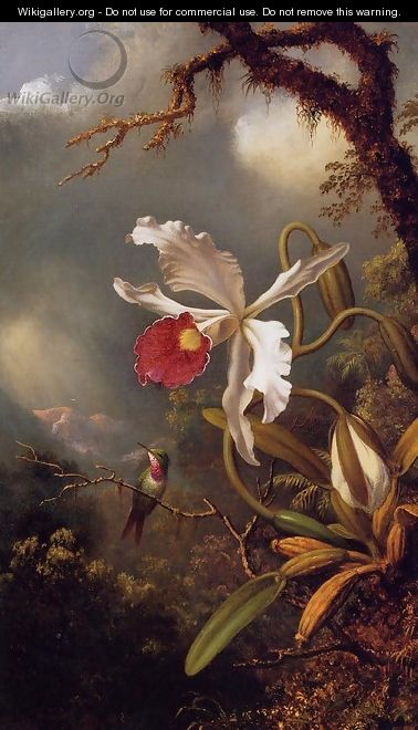 An Amethyst Hummingbird With A White Orchid - Martin Johnson Heade