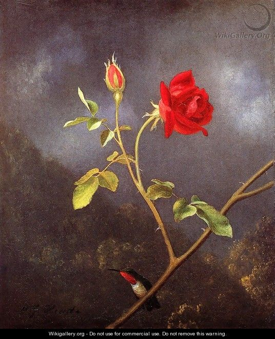 Red Rose With Ruby Throat - Martin Johnson Heade