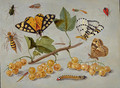 Butterflies and Insects c. 1655 - Jan van Kessel