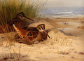 Woodcock Nesting On A Beach - Archibald Thorburn