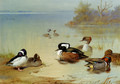 Buffel-headed duck,, American green-winged teal and hooded merganser - Archibald Thorburn