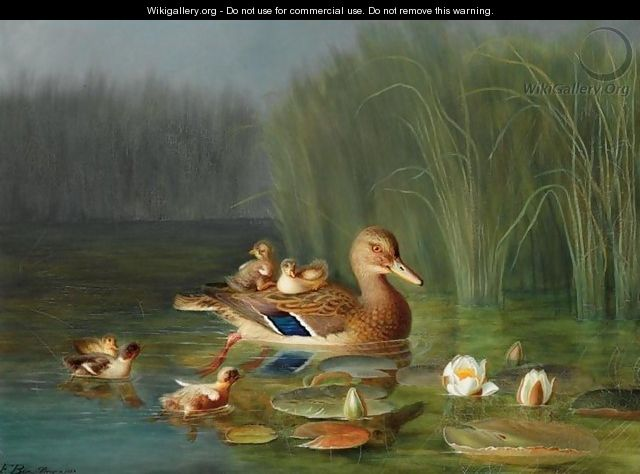 Wild Duck with its Ducklings (Villender) - Franz Boe