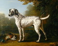 Grey spotted hound, 1738 - John Wootton