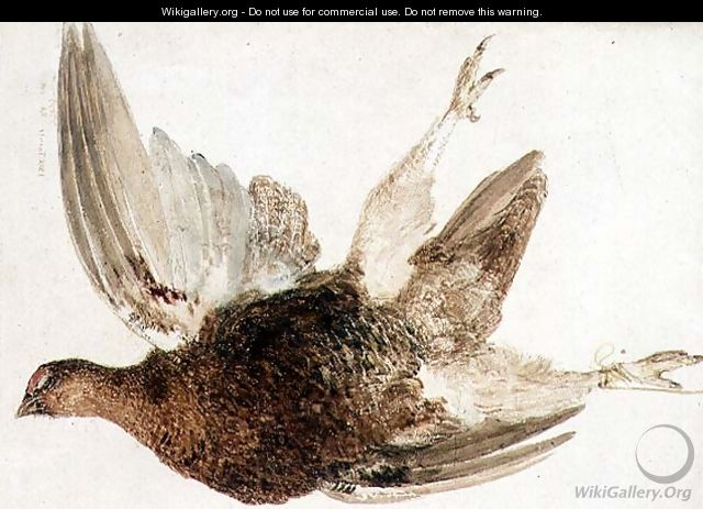 Grouse, from The Farnely Book of Birds, c.1816 - Joseph Mallord William Turner