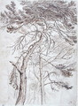 Study of Trees - James Ward