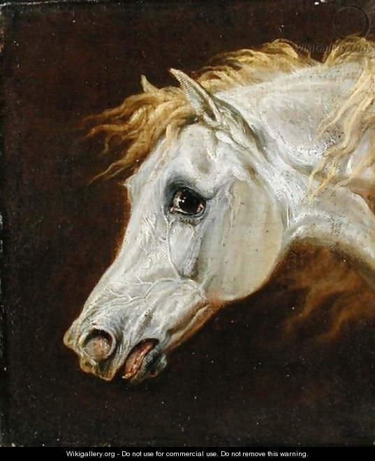 Head of a Grey Arabian Horse - Martin Theodore Ward