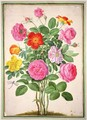 Roses, plate 4 from the Nassau Florilegium - Johann Jakob Walther