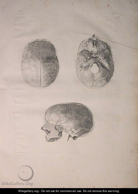 Albinus II, Tab. III, Cranial bone, illustration from