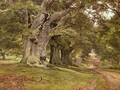 The Oak's Massive Trunk, Aldermaston Park, Berkshire, 1912 - Edward Wilkins Waite