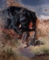 Gordon Setter among reeds - William Woodhouse