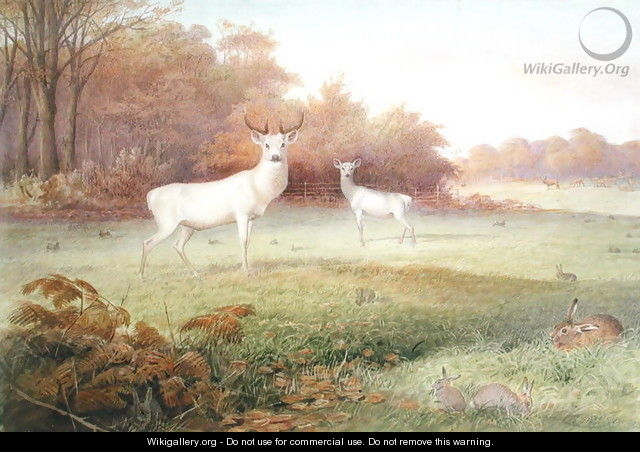 Cervus elaphus (White Variety), from The Knowsley Menagerie, October 24th 1850 - Joseph Wolf