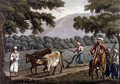 Agriculture in Syria, engraved by Joseph Constantine Stadler (fl.1780-1812) pub. by J. White, 1801 - (after) Willyams, Cooper