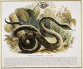 The Boa Constrictor, educational illustration pub. by the Society for Promoting Christian Knowledge, 1843 - Josiah Wood Whymper
