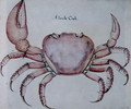 Land Crab 2 - John White