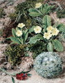 Primroses and Nest, 1877 - John Sherrin