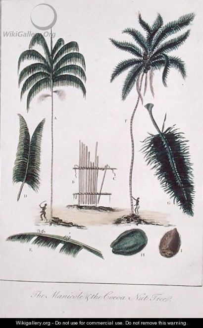 The Manicole and the Cocoa Nut Tree, from Narrative of a Five Years Expedition against the Revolted Negroes of Surinam 1772-77, published 1791 - John Gabriel Stedman