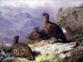 Red Grouse on the Shore of a Loch - Archibald Thorburn