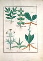 Ferns and Shrubs, Illustration from the Book of Simple Medicines by Mattheaus Platearius d.c.1161 c.1470 - Robinet Testard