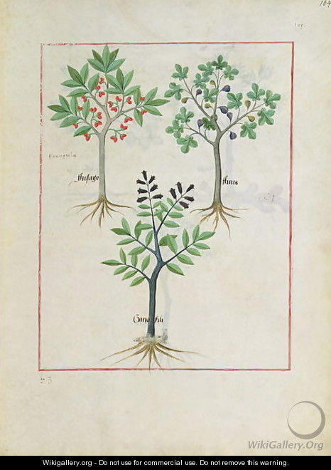 Illustration from the Book of Simple Medicines by Mattheaus Platearius d.c.1161 c.1470 6 - Robinet Testard