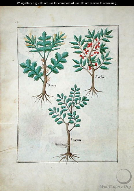 Illustration from the Book of Simple Medicines by Mattheaus Platearius d.c.1161 c.1470 5 - Robinet Testard