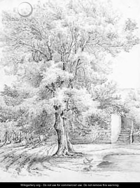 Sketch of an ash tree at Duffryn - Lucy Angeline Bacon