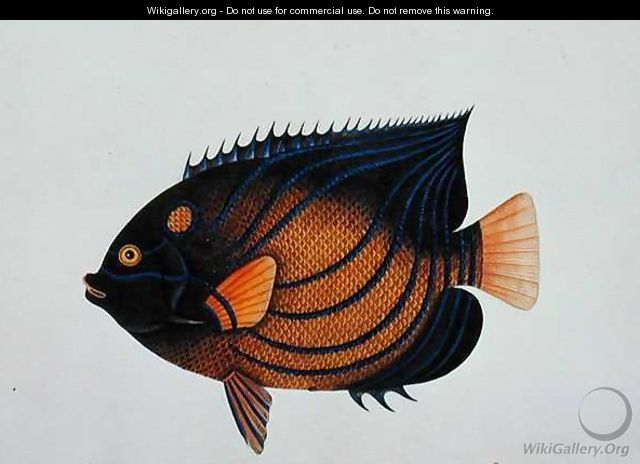 Exotic Fish, from