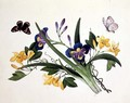 Blue Iris and Insects -  Anonymous Artist