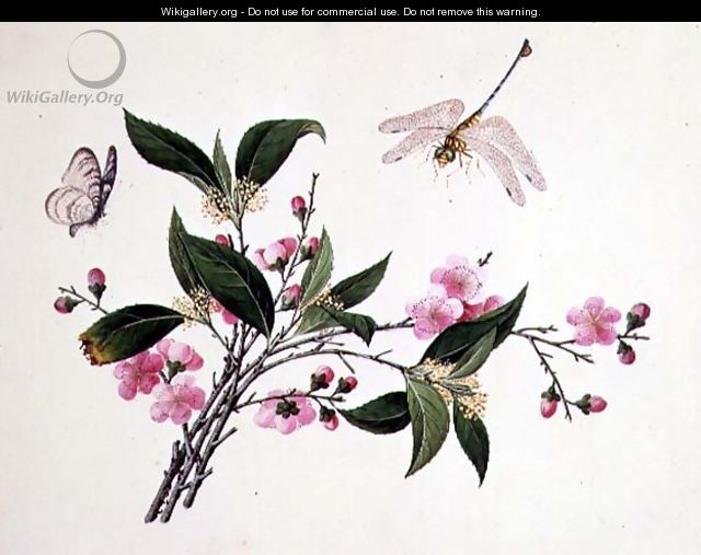 Cherry Blossom, Dragonfly and Butterfly - Anonymous Artist
