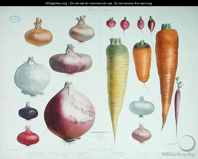 Onions, Radishes and Carrots, from the first