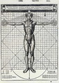 Ideal proportions based on the human body, from