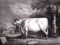 The Baron, a prize shorthorn (The Nannau White Cow), 1824 - Daniel Clowes