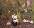 Poultry in a Wood, c.1890 - Emile Claus
