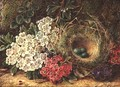 Still life with bird's nest - George Clare