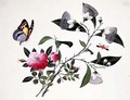 Flower Study and Insects (2) - Anonymous Artist