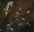 Flower Studies: Persicaria and Meadowsweet - John Constable