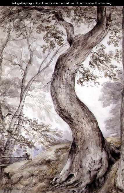 Tree at Helmingham, c.1800 - John Constable