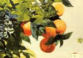 Oranges on a Branch - Winslow Homer