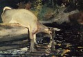 Deer Drinking - Winslow Homer