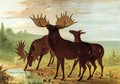 Moose at Waterhole - George Catlin