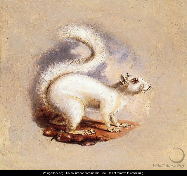 White Squirrel - Titian Ramsay Peale