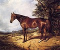 Thoroughbred - Arthur Fitzwilliam Tait