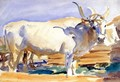 White Ox at Siena - John Singer Sargent