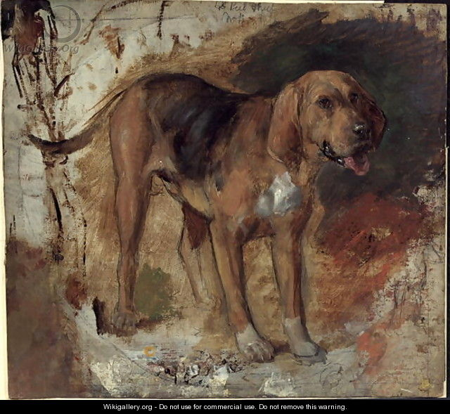 Study of a Bloodhound - William Holman Hunt