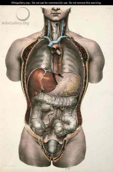 Internal organs - Nicolas Henri Jacob