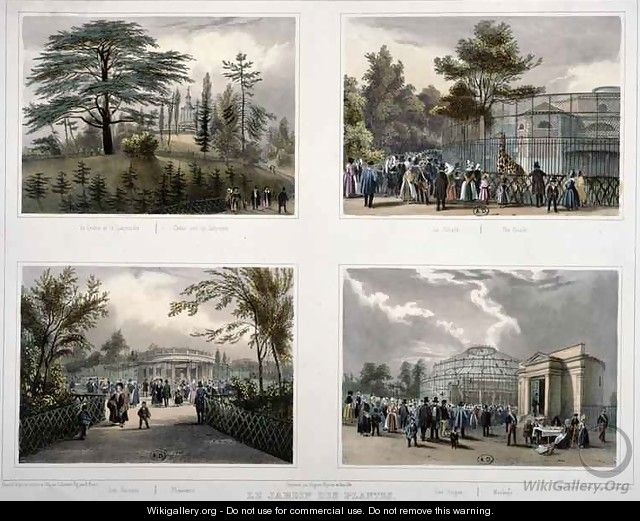 The Jardin des Plantes in Paris Cedar and the Labyrinth The Giraffe Pheasants Monkeys - Julien & Bayot, Adolphe Jacottet