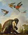 Chained monkey in a landscape - Melchior de Hondecoeter