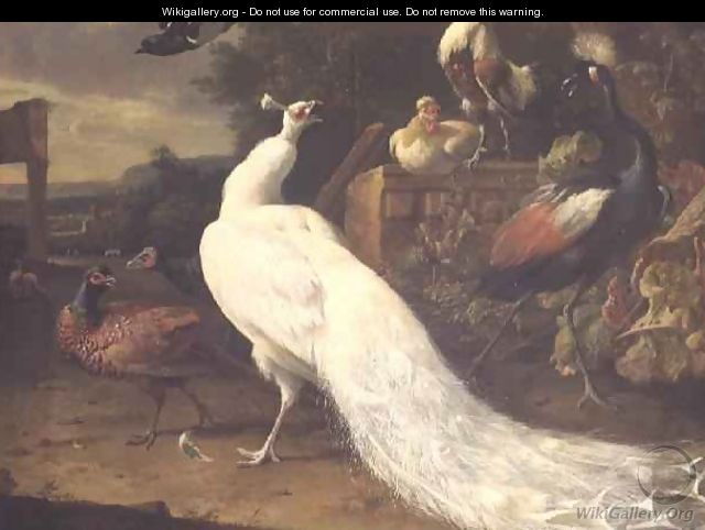 The White Peacock - Melchior de Hondecoeter